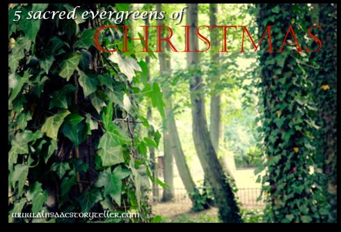 evergreens of christmas